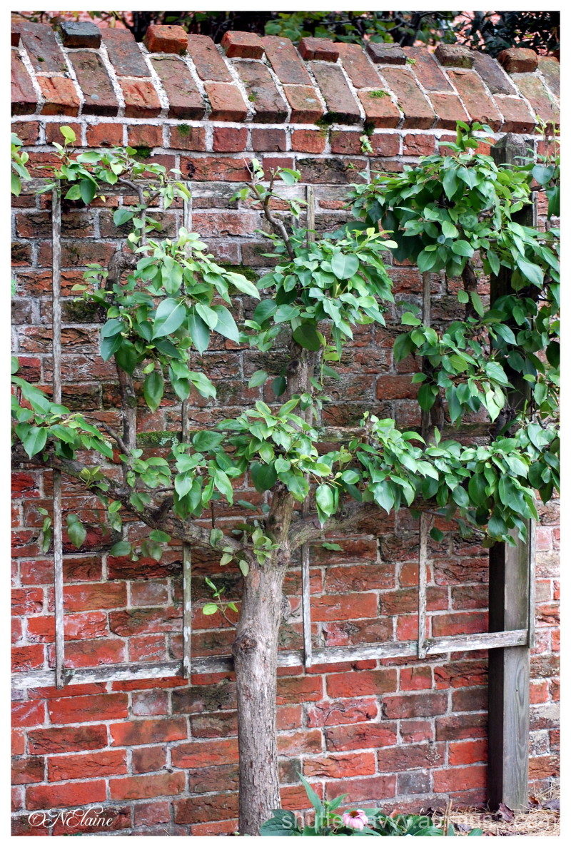 tree on wall