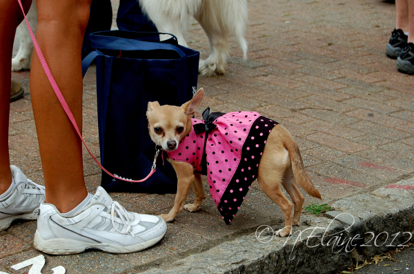 dog in dress