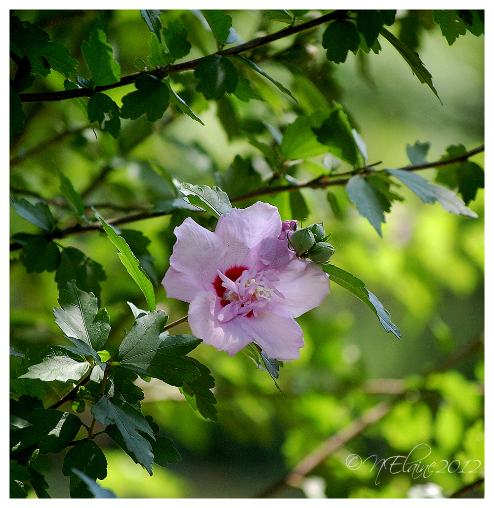 flower in tree