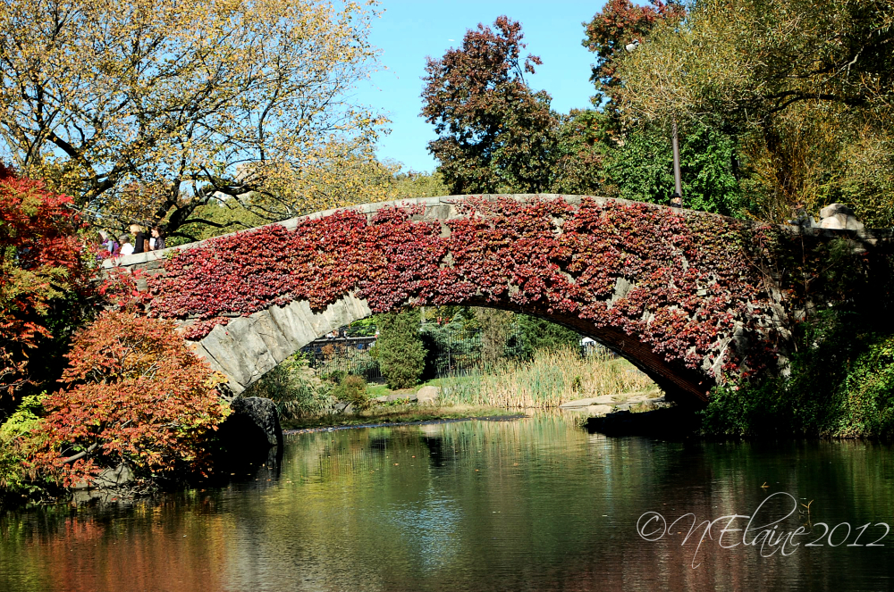 bridge and pond