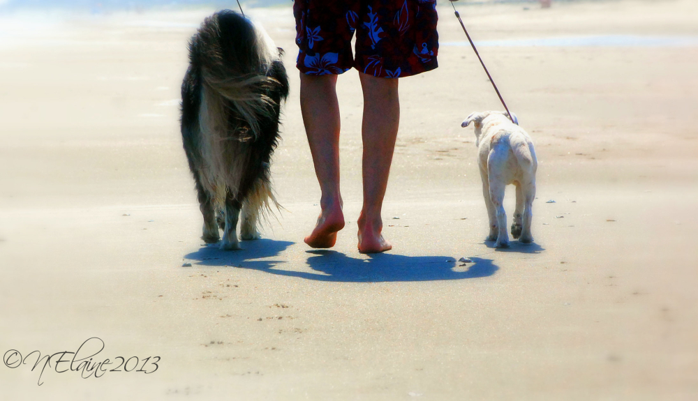 man and dogs walking on beach
