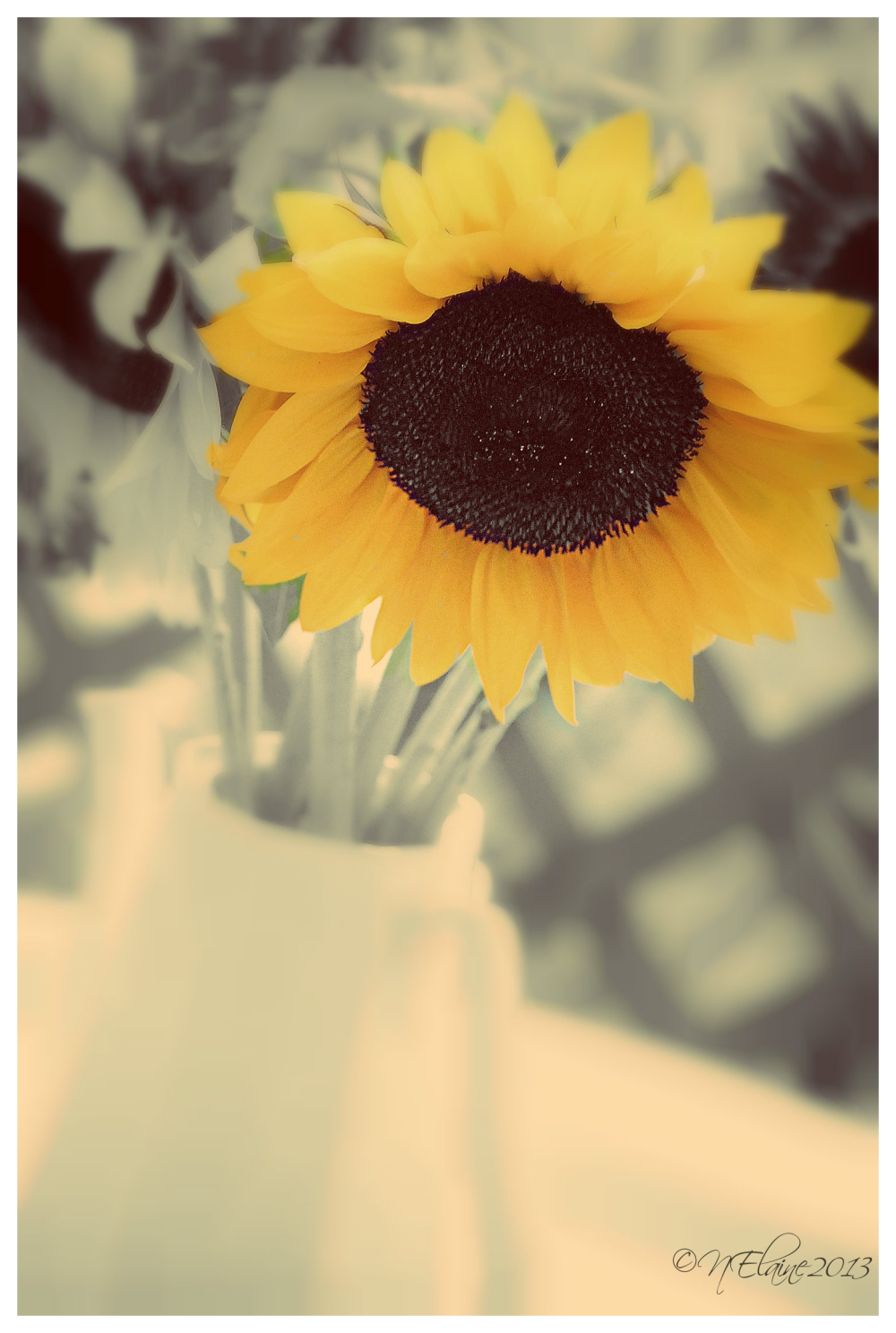 sunflower in pot