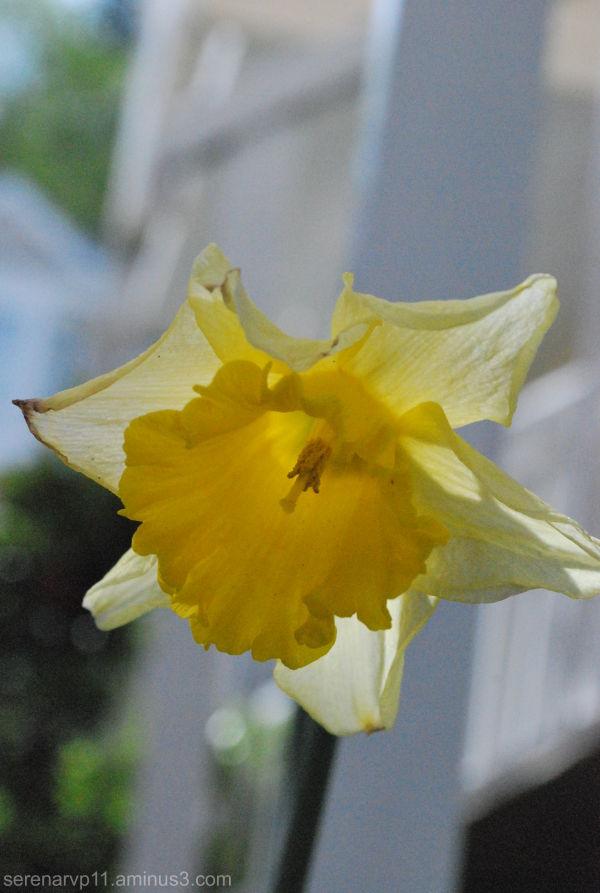 Hello Mellow Yellow
