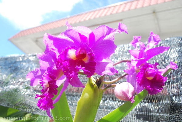 Oooohh Orchids