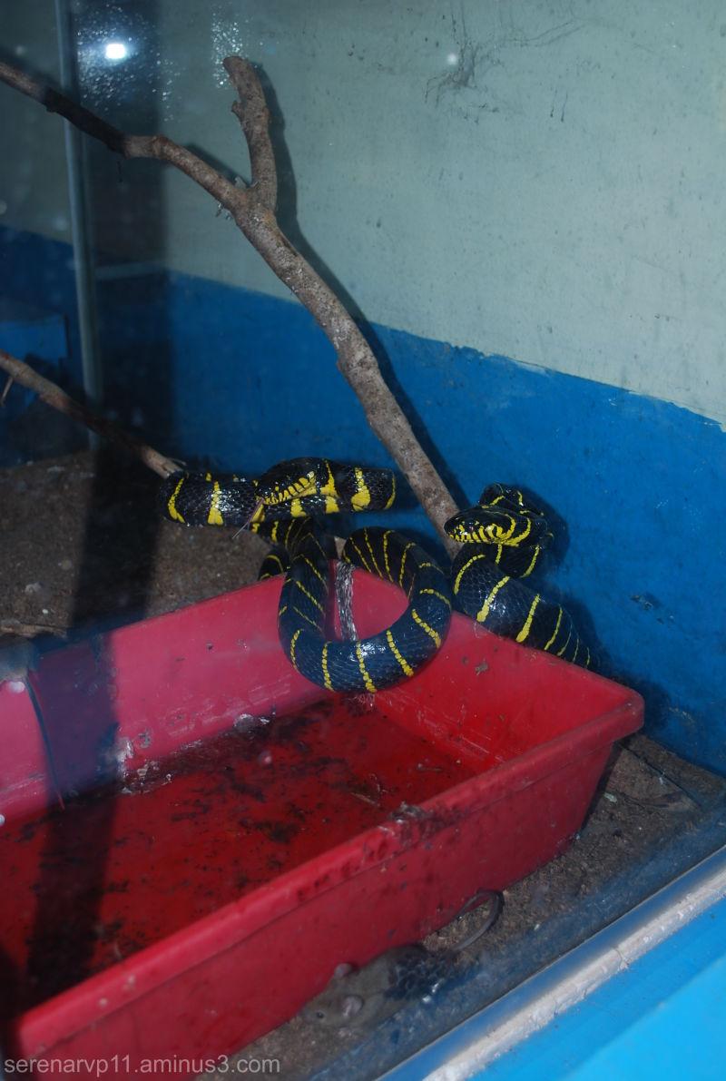 Slimy snakes