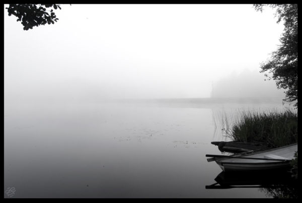 Misty morning at the lake