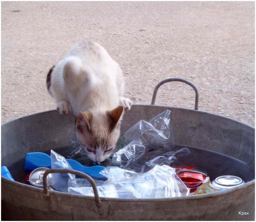 Quitando la sed