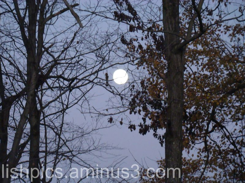 Full Moon (11/2/09)