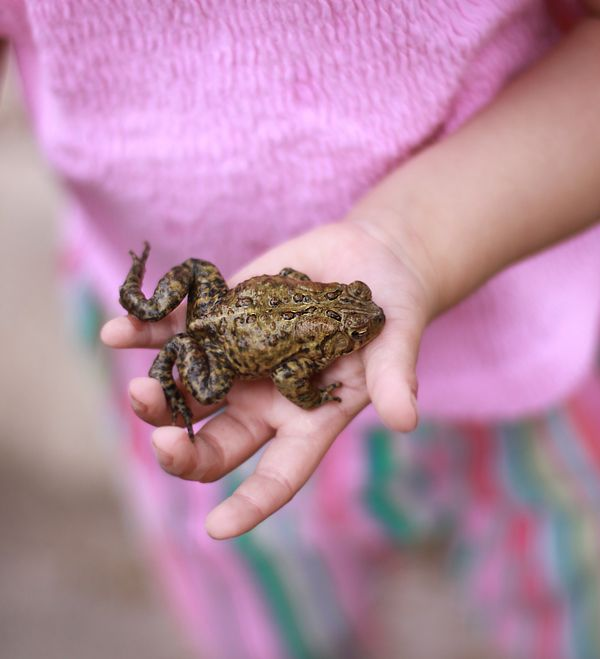.of kids and toads