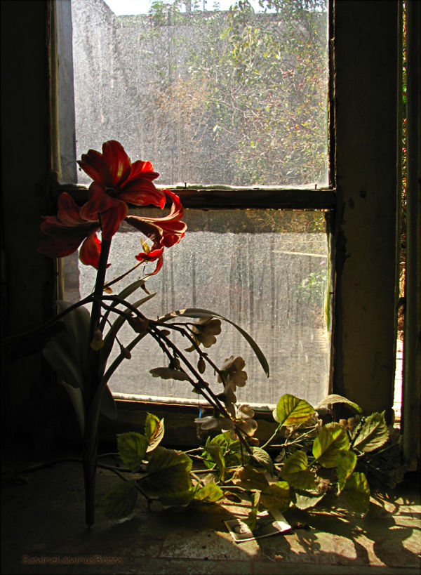 ..  پناه پنجره