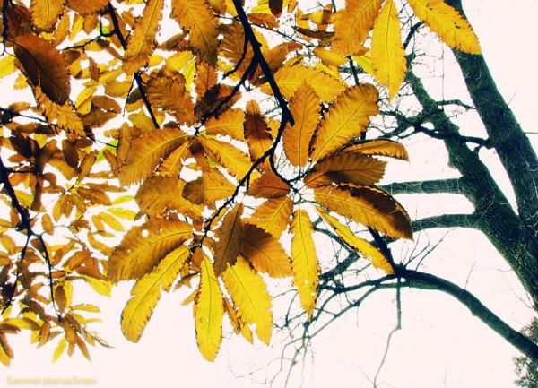 پرسه ی پاییزی 1
