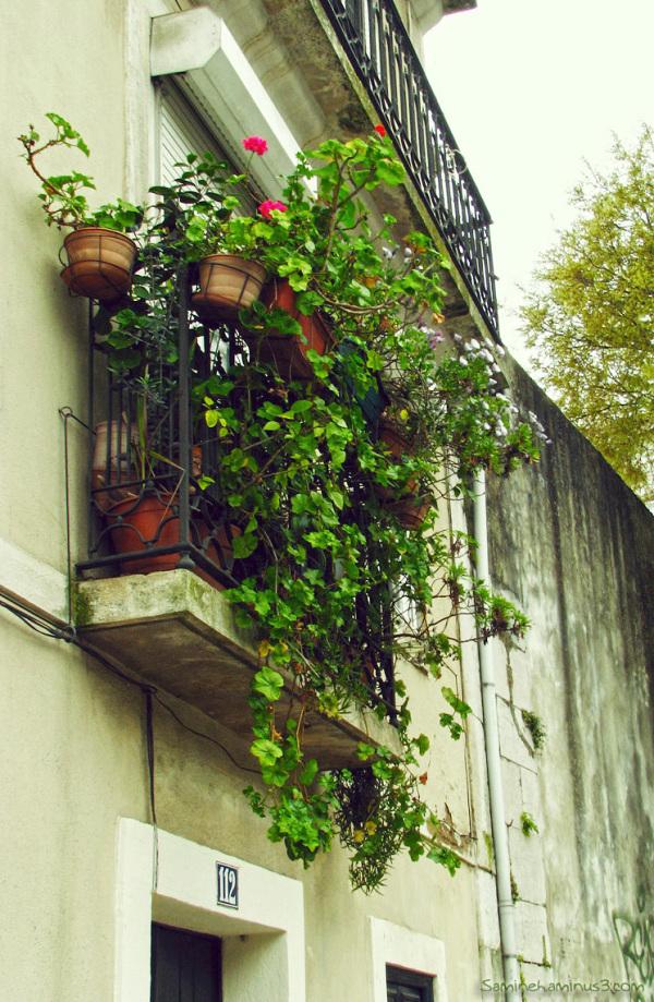 پنجره های بهار..5