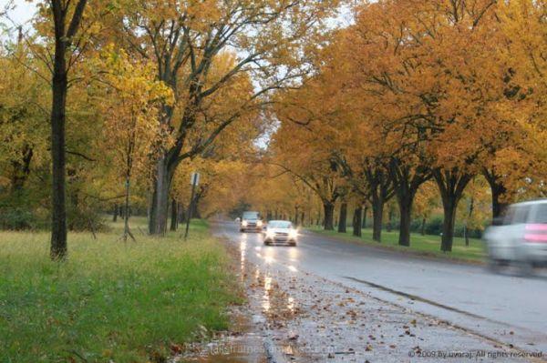 unplanned shot - autumn road