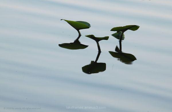 lake aquatic plant princeton
