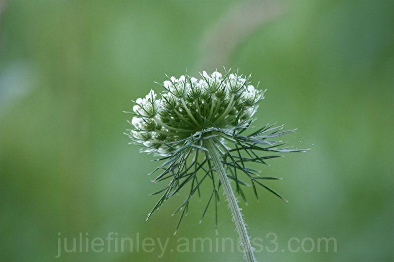 Wild flower standing alone.