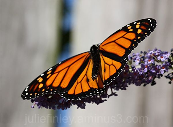 Yes, another butterfly!