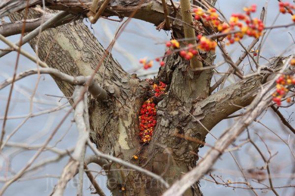 Fallen berries.