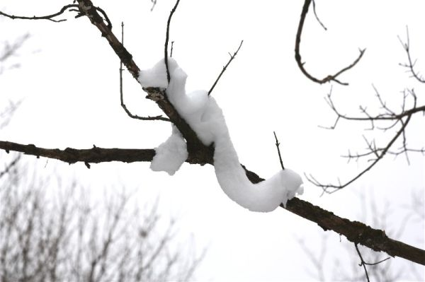 A snow snake?