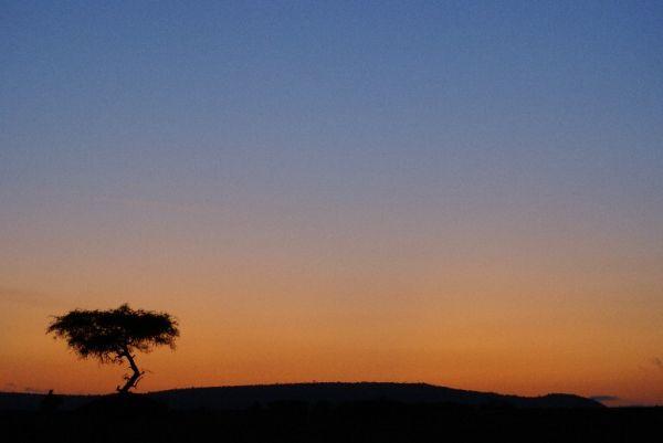 Lever de soleil dans Masaï Mara
