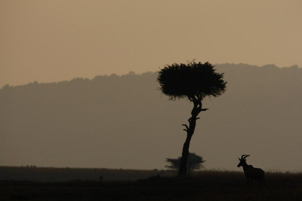 Kenya, Masai Mara, topis