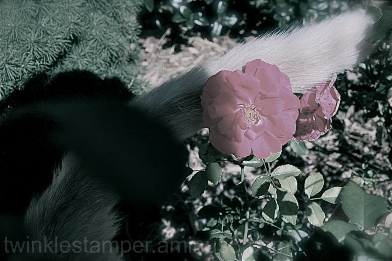 ...a bloom, a furry friend, a photographer...