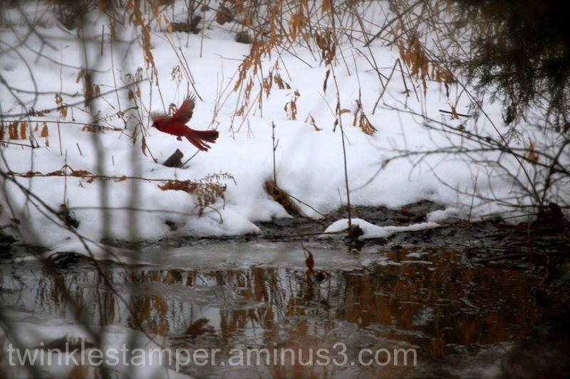 Winter's Beauty
