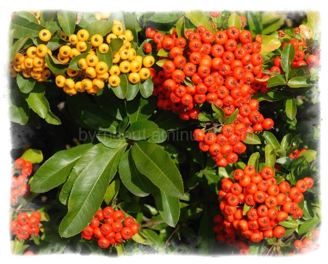 Red, Amber, Green