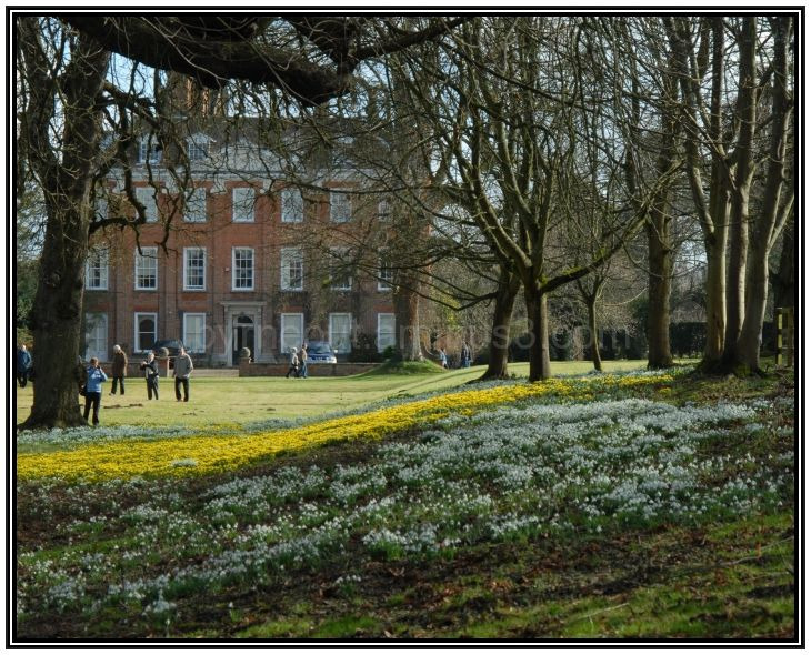 Welford House Snowdrops