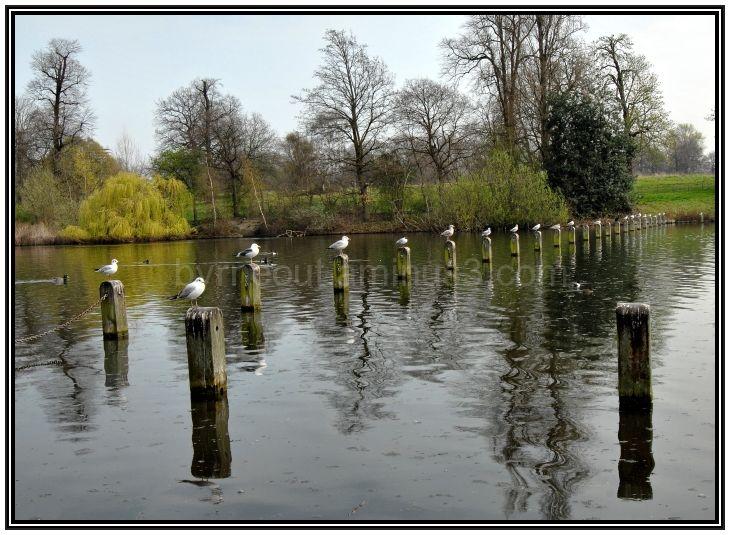Gulls in a row