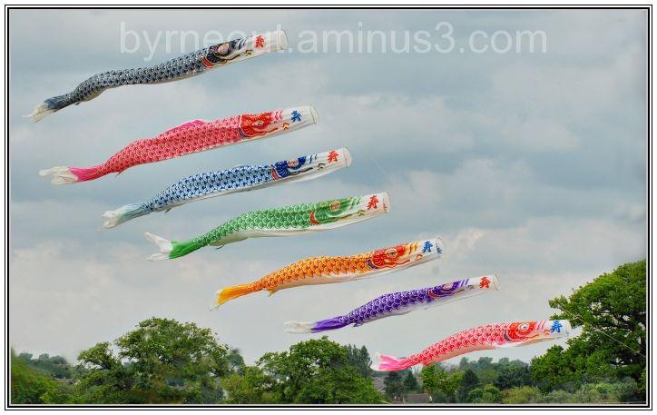 Flying Fish Kites