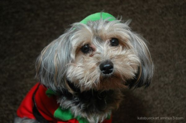 Lily the Elf 1