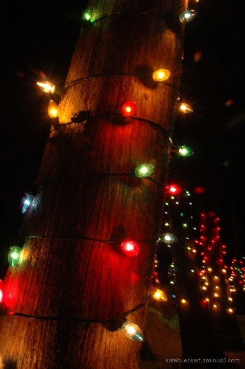 Sparkles - Lights on tree trunks