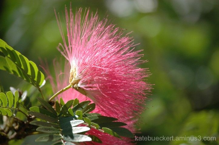 Spiky pink flower plant nature photos borrowing a moment spiky pink flower mightylinksfo