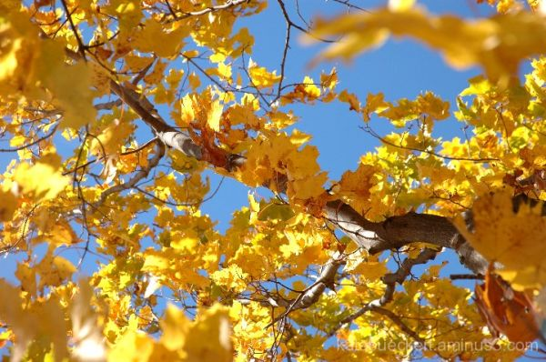 A fall day in October - yellow leaves