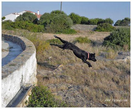 perro volador...