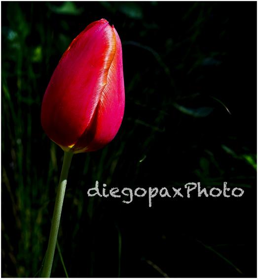 mirando#flores