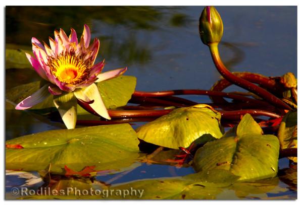 La Flor en la fuente