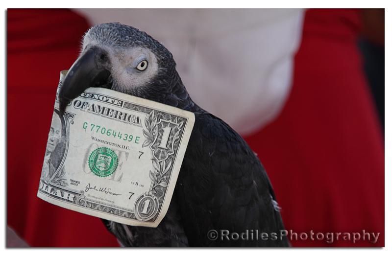 Mascotas (It's a dollar per picture!)