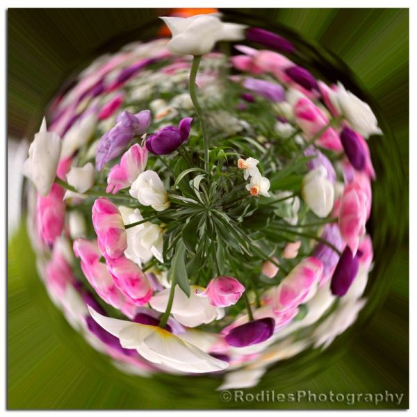 Mundo de Flores