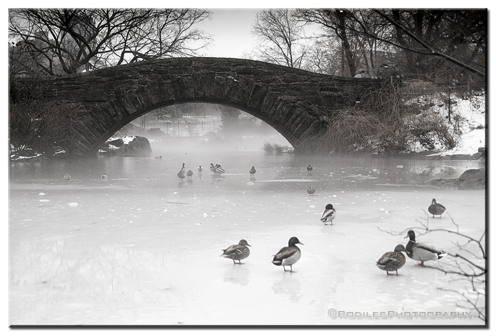 The Ducks and the frozen lake