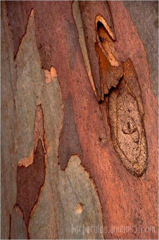 Eucalpytus Bark Pattern