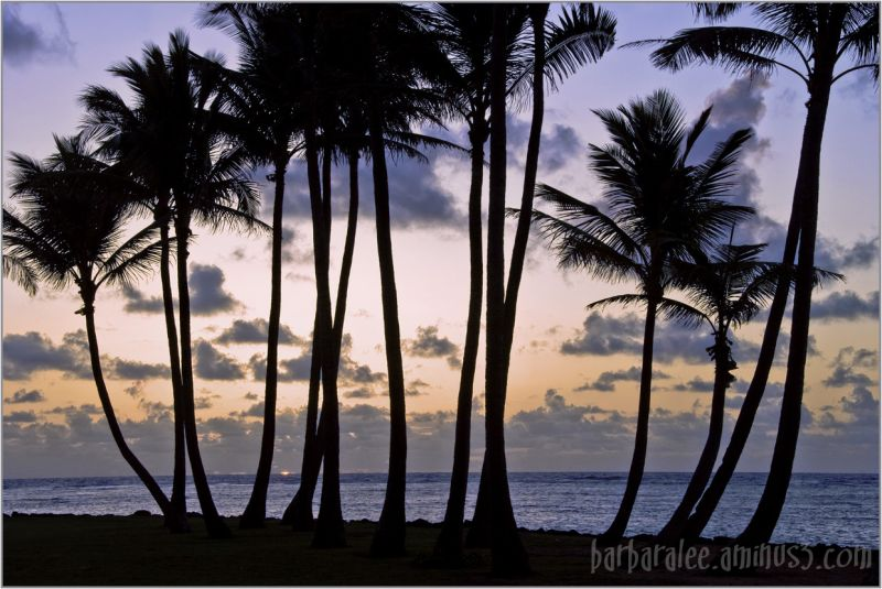 Kapa'a Sunrise with Palm Trees
