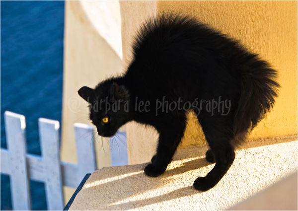 Black Cat on Santorini Wall