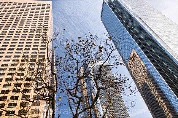 Looking Upward Through Skyscrapers in Los Angeles