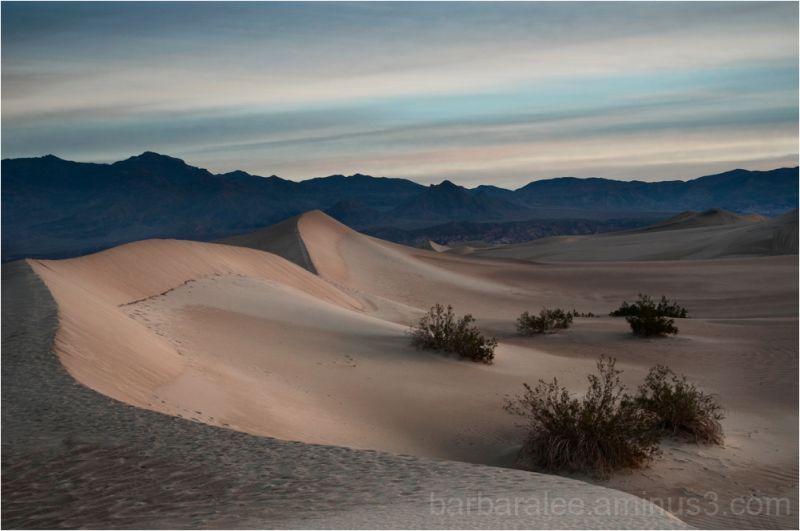 Mesquite Dunes at Daybreak