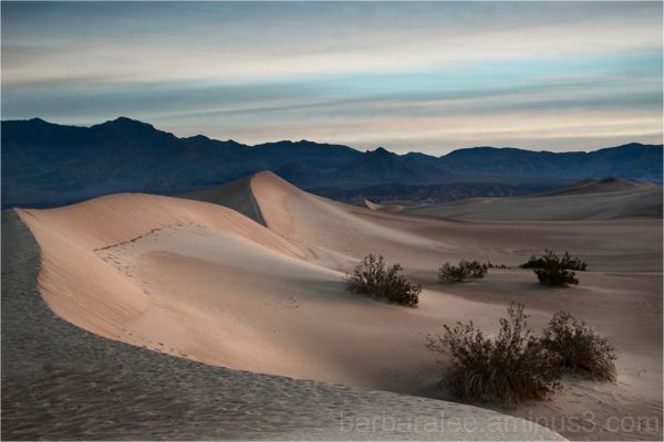 Mesquite Dunes at Daybreak - Death Valley