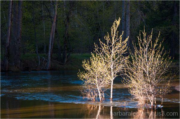 Morning Illumination in Yosemite Valley