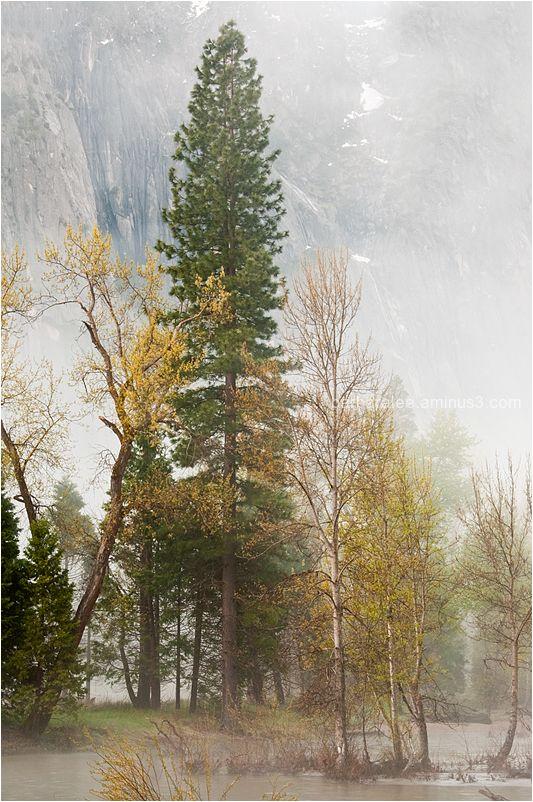 Foggy Spring Morning in Yosemite Valley
