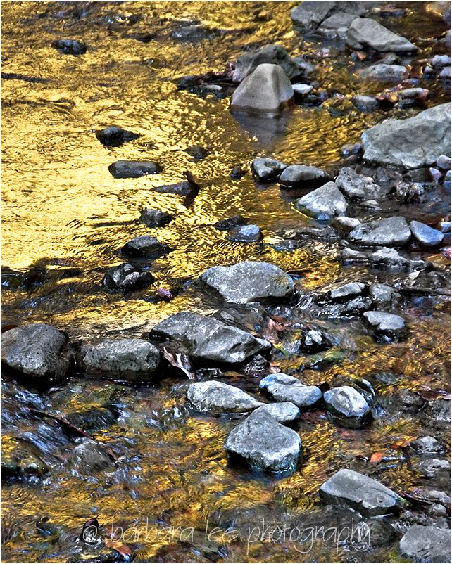 Golden Muir Woods Stream