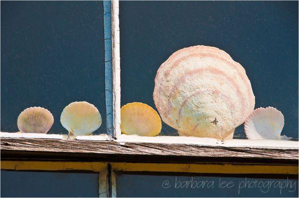 Shells in a Window
